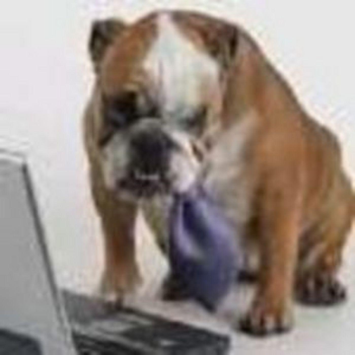 <![CDATA[Bulldog Marketing]]>